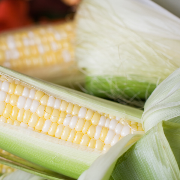 Sweet Corn, Bi-color