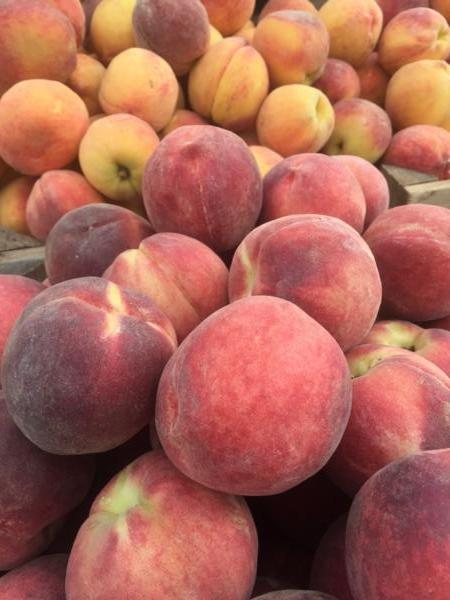 Peaches (1 quart)