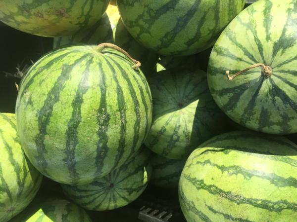 Watermelon - Seedless Red $5 each