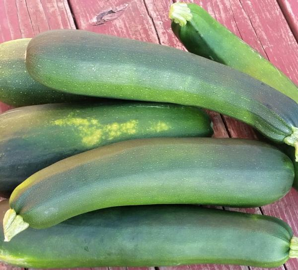 Large Green Zucchini - Organically Grown (each)