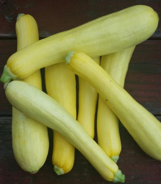 Yellow Summer Squash - Organically Grown (lb.)