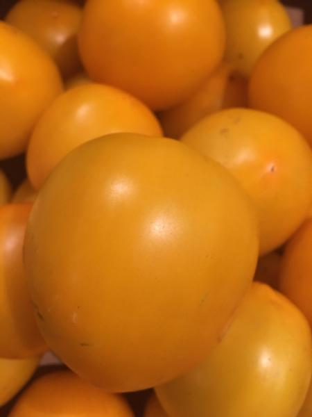 Yellow Tomatoes - Organically Grown (2 lbs.)