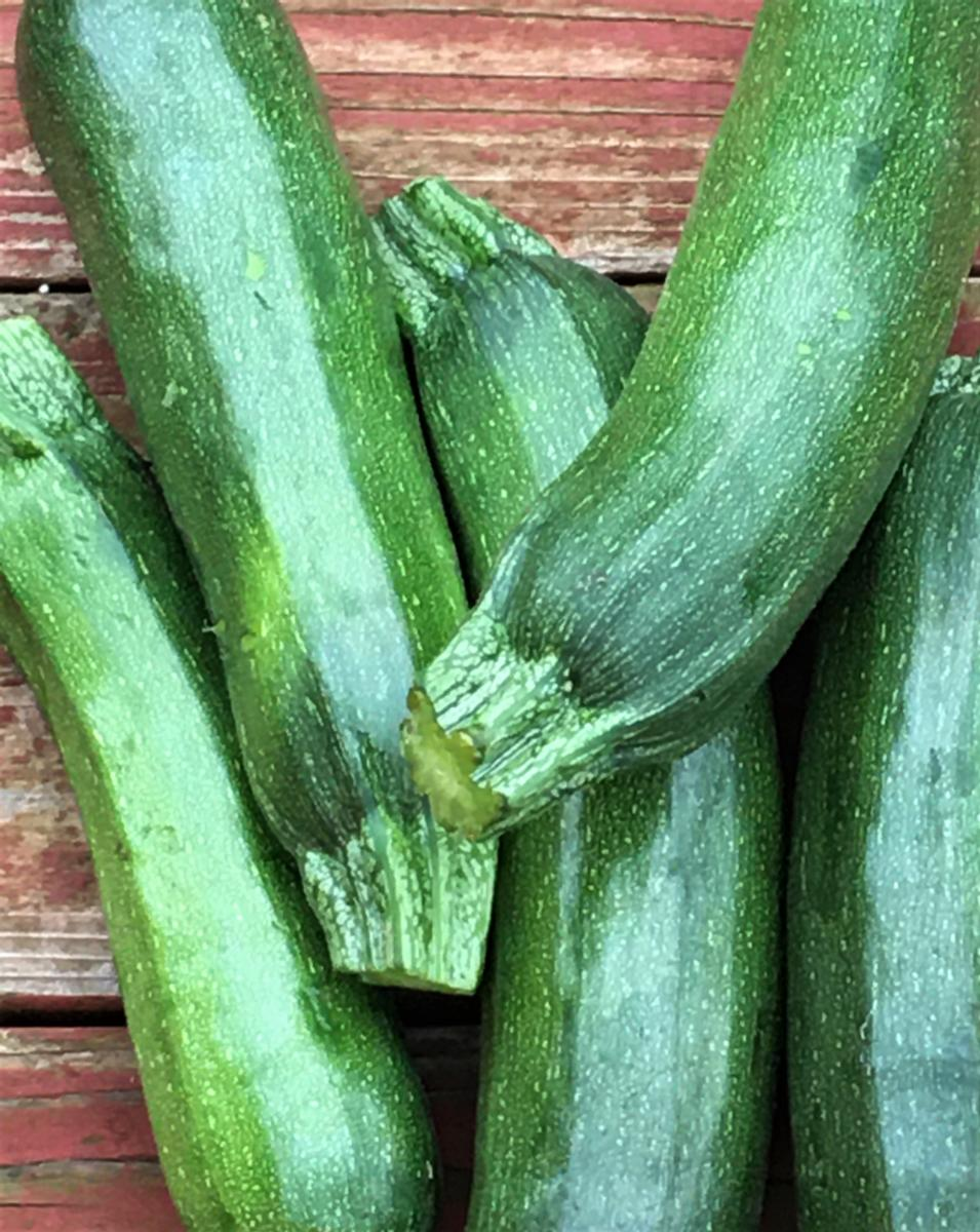 Zucchini - Organically Grown (lb.)